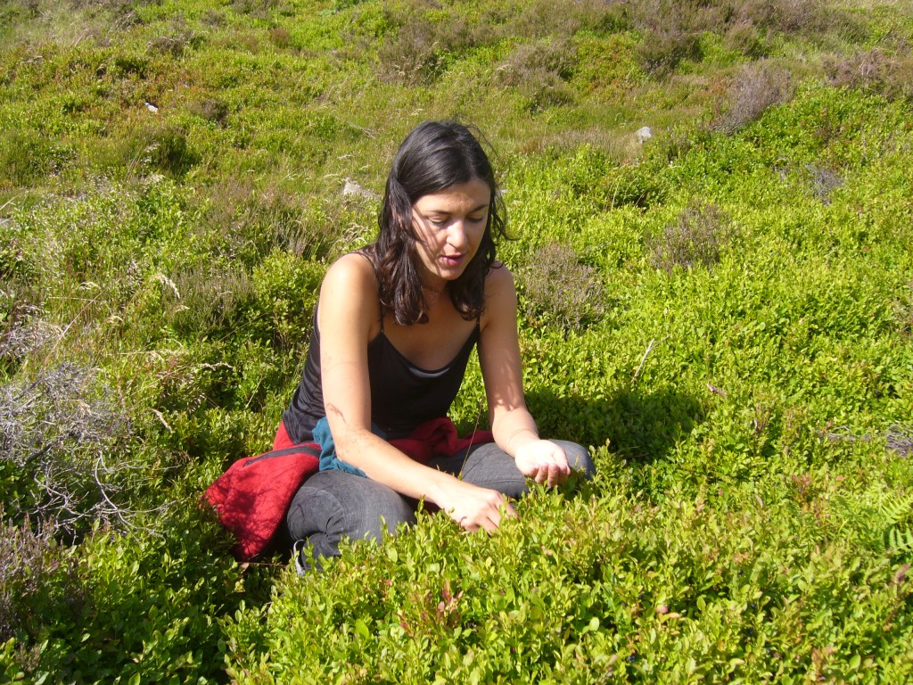 Collecting Vaccinium myrtillus to make bilberry syrup and cordial