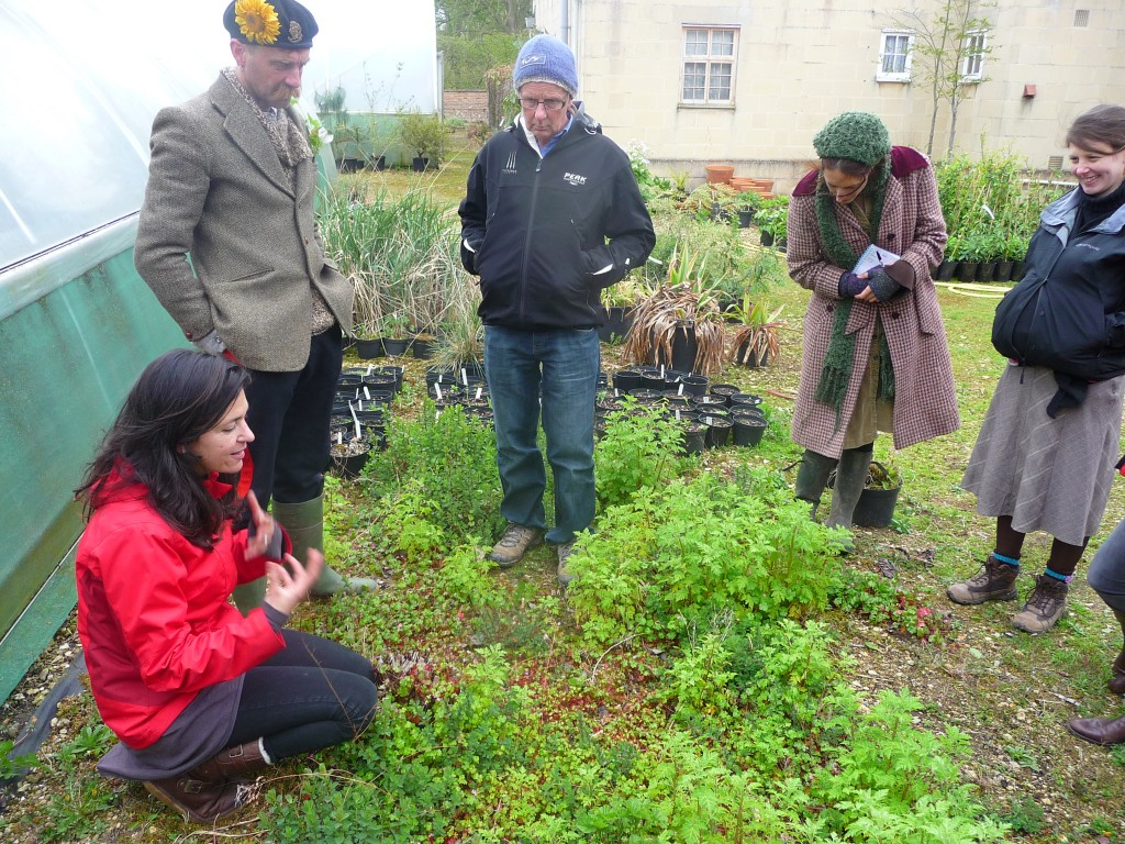 Looking at St. John's Wort and Feverfew in the nursery