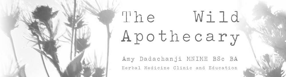 The Wild Apothecary - Amy Dadachanji MNIMH, Medical Herbalist,  Gloucestershire