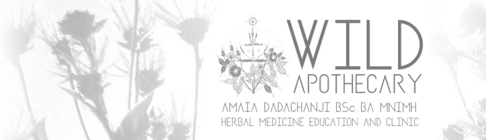 Wild Apothecary - Amaia Dadachanji MNIMH, Herbal Medicine and Education